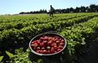 В Украине цены на клубнику на историческом максимуме