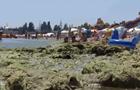 Море в Одессе будет  цвести  месяц - экологи