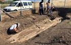 Археологи знайшли в Греції дерево віком 20 мільйонів років