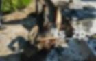 Женщина устроила самосожжение возле храма в Запорожье