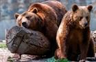 Кабмин бесплатно раздал конфискованных диких животных