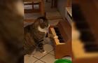 В США появился кот-пианист