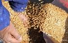 На Чернігівщині  миші з їли  600 тонн зерна Держрезерву