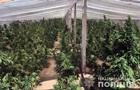 На Херсонщині накрили плантації конопель