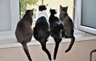 Іспанця виселили з квартири через 110 кішок