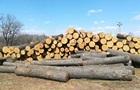 Закарпатье будет продавать всю необработанную древесину через Prozorro