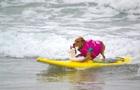 У США змагались собаки-серфінгісти