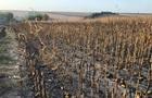 У Полтавській області загорілося 130 га кукурудзи