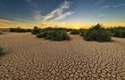 Две пятых растений в мире могут исчезнуть - ученые