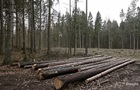 На Волині незаконно вирубали ліс на 17 млн гривень