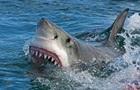 Акула покусала в Єгипті відпочиваючих українців