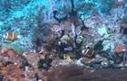 В Австралии обнаружили громадный коралловый риф
