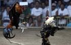 Бойовий півень вбив поліцейського на Філіппінах