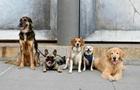 Вчені встановили, звідки пішло різноманіття порід собак