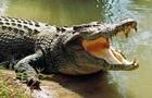 Ученые заявили о до сих пор неизвестной способности аллигаторов