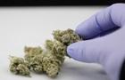Легалізація канабісу важлива для тяжкохворих пацієнтів - Ляшко