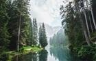 IKEA выкупила тысячи гектаров леса в США, чтобы остановить его вырубку