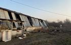 У Мукачеві пожежа знищила свинокомплекс