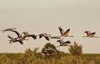 Названо причину смерті птахів у заповіднику на Херсонщині