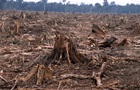 На Харківщині через незаконну вирубку лісу під суд підуть 15 осіб