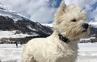 Собака-путешественница вызвала зависть у своих подписчиков