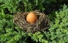 У мережі з явилося відео подвійного курячого яйця