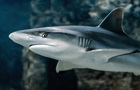 Дайвер вижив у воді, що кишіла акулами
