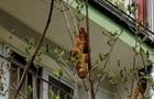 В Кракове круассан на дереве перепутали с игуаной