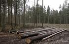 В Украине проведут национальную инвентаризацию лесов