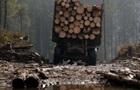 Появилось видео массовой вырубки лесов на Волыни