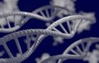 Вчені з ясували, як аварія на ЧАЕС вплинула на генетичне здоров я