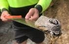 В Австралии обнаружили гигантского мотылька