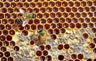 Україна відновила рекорд з експорту меду
