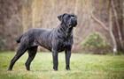 У Донецькій області дві собаки загризли чоловіка