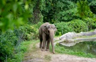 Слониха подала в суд на зоопарк через поневолення
