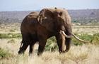 В Кении стартовала национальная перепись дикой природы