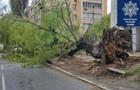 Сильный ветер в Киеве сломал пару деревьев