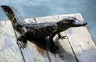 На узбережжі Кирилівки знайшли мертвого крокодила