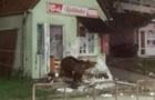 Румунське курортне місто  окупували  ведмеді
