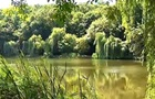Мор рыбы и птиц в киевском парке: в воде обнаружен яд
