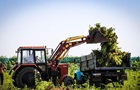 На Херсонщине уничтожили рекордный урожай конопли