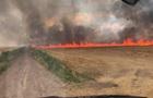 В Николаевской области горело поле пшеницы
