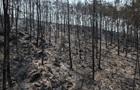 У Туреччині тривають сім великих пожеж