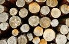 У Румунії побили знімальну групу фільму про незаконну вирубку лісу