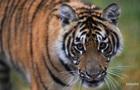 В зоопарке в Крыму тигр откусил палец ребенку