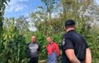 На Закарпатье обнаружили охраняемое поле конопли