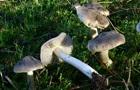 Під Харковом пенсіонерка померла від отруєння грибами