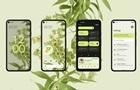 Google презентував операційну систему Android 12