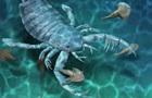 Знайдені скам янілості найдавнішого ракоскорпіона