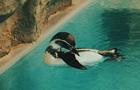 В Украину привезли пингвинов Гумбольдта